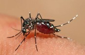 Study finds potential new weapon in fight against malaria