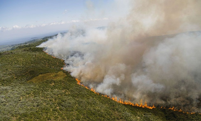 Mount Kenya wildfire: Marijuana farmers blamed