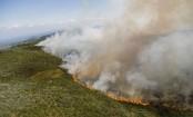 Mount Kenya wildfire: Marijuana farmers blamed