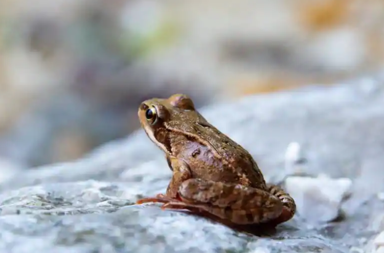 Bacteria found in frog skin may help fight fungal infections in humans