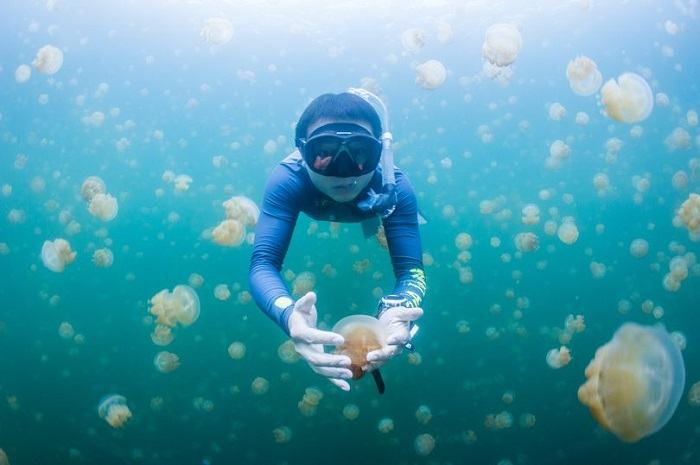 Lake filled with thousands of jellyfish