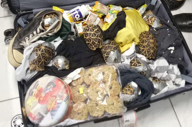 Philippines seizes 1,500 rare turtles in luggage