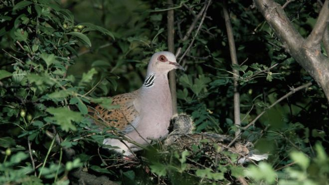 Bird extinctions driven by global food trade