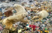 Russia's Arctic plans add to polar bears' climate woes