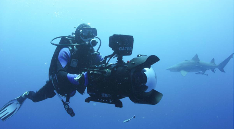 Shark documentary released after filmmaker's diving death
