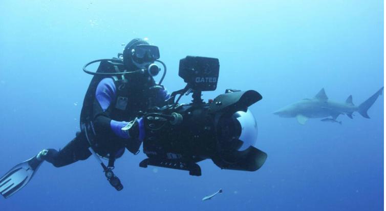 Shark documentary released after filmmaker's diving death