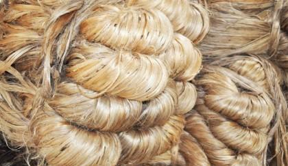 Golden days ahead for golden fibre