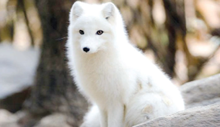 Climate change forces Arctic animals to shift feeding habits