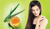 Aloe Vera & Its Benefits  For Your Hair