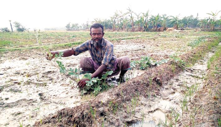Farmer is taking care of his watermelon farm