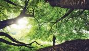 Nature: A  Sanctuary Of Spiritual Serenity