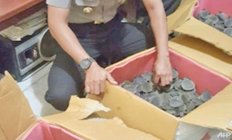 Smuggler arrested in Indonesia with 2,000 rare turtles