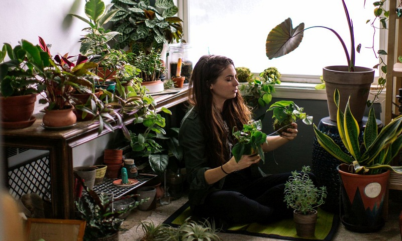 How to take care of plants at home?