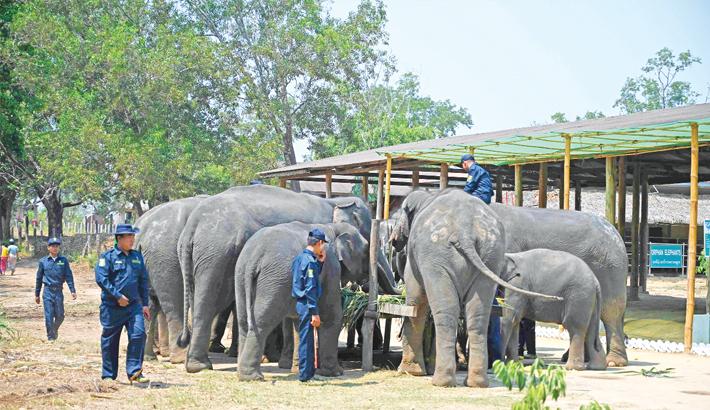 Winga Baw elephant conservation camp