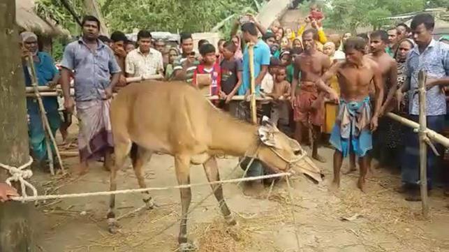 Bangladesh's only female Nilgai dies at Ramsagar National Park