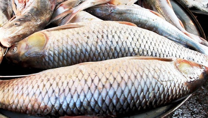 2-yr jail for adulterating fish, fish products; law coming