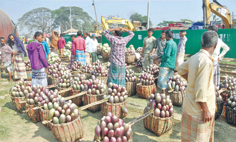 Growers display brinjal for sale at Dohazari