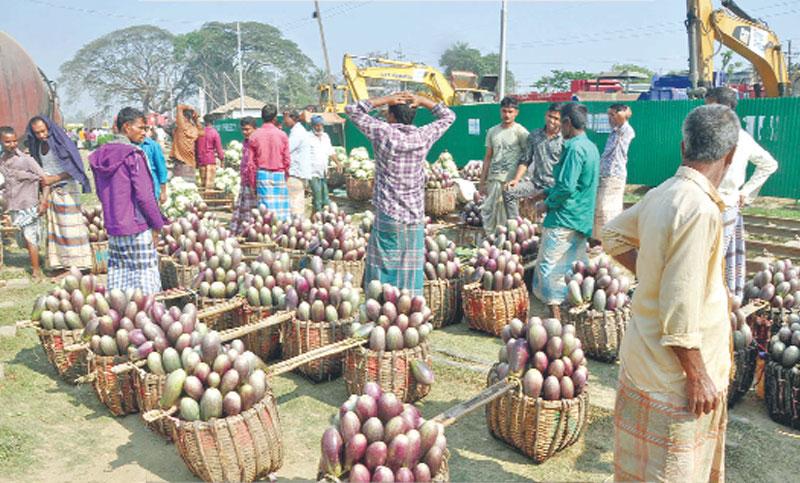 Growers display brinjal for sale at Dohazari