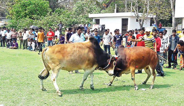 A traditional bullfight was held at Government Victoria College playground