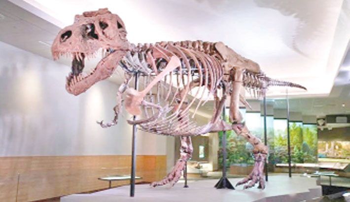 Tyrannosaurus rex found in Canada is world's biggest