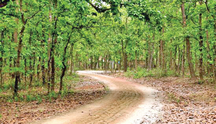 Grabbers devour one-fifth  of Gazipur forest land
