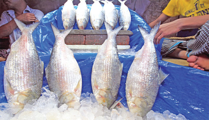 Hilsa sale up ahead of Pahela Baishakh