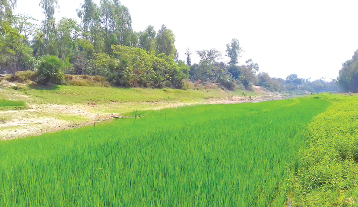 What was once a flowing river has become croplands in Gur river