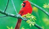 Birds of Ruposhi  Bangla