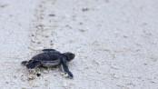Blue Planet: Producer defends sea turtle hatchling release