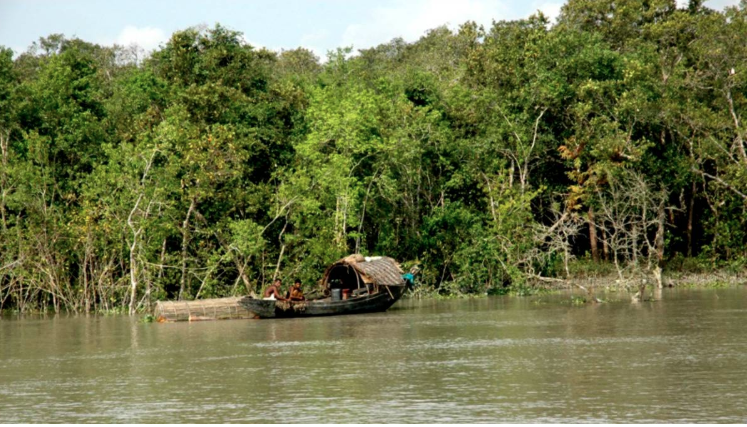 Carrying flammable substances inside Sundarbans banned
