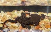 Unfroggetable: Endangered Bolivian amphibians Romeo, Juliet get long-awaited first date