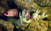 Bleaching hits world's southernmost coral reef: scientists