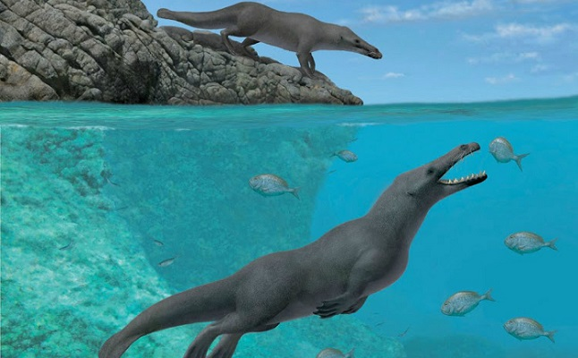 Four-legged prehistoric whale fossil found in Peru