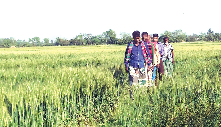 Farmers expect bumper production