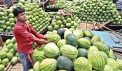 Watermelons hit city markets