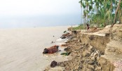 Meghna River devours homesteads and croplands
