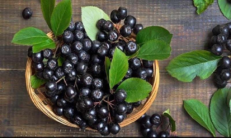 Add chokeberries in porridge to help boost health