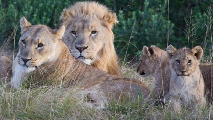Elephant kills rhino poacher, eaten by lions in South Africa