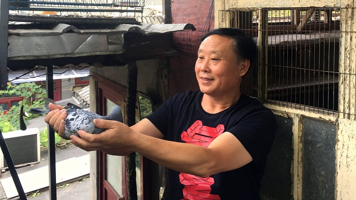 Inside the fascinating and brutal world of pigeon racing in China