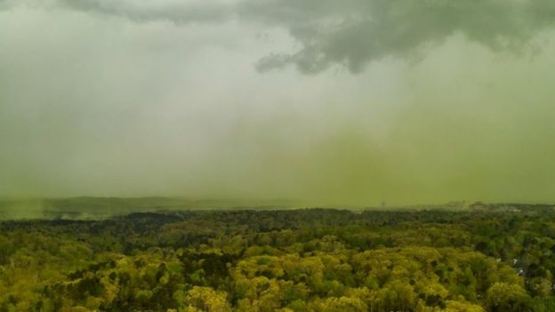 Pollen clouds shroud parts of US south-east as allergies spike