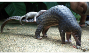 Busts in Asia reveal scales from 38,000 endangered pangolins