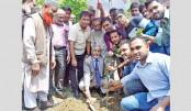 Tree plantation campaign