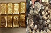 Father-son remanded over smuggling of gold, turtle