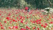 Florists await viable marketing system