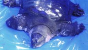 One of the World's rarest turtles dies in China