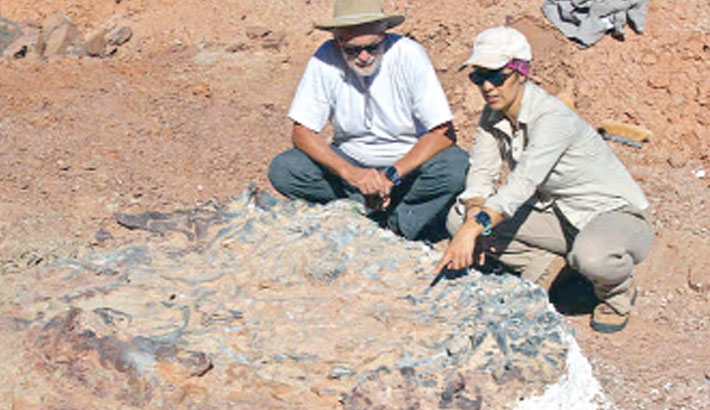 220mn-year-old dinosaur fossils discovered