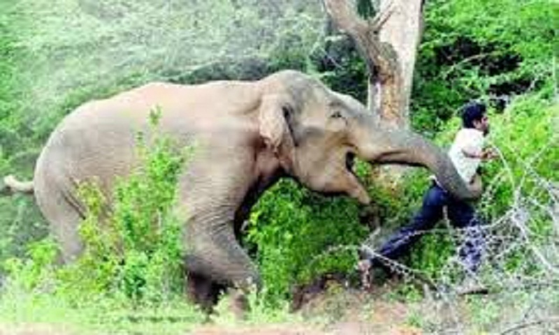Wild elephant tramples 5 people to death in Odisha