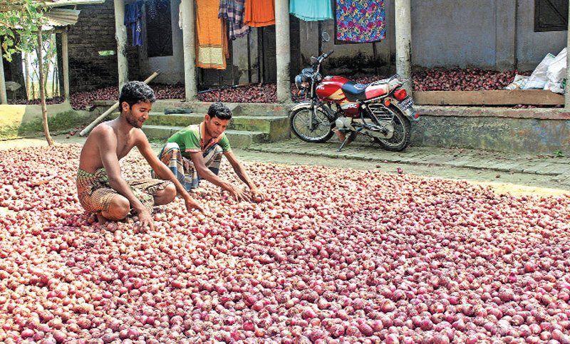 Farmers are busy drying onion in the sun