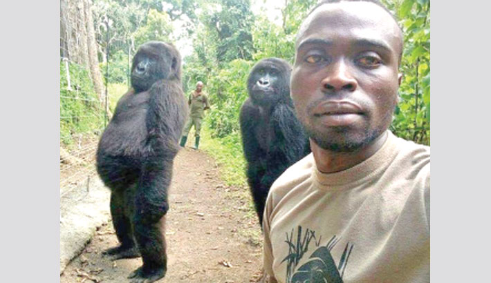 Gorillas pose for selfie with rescuers