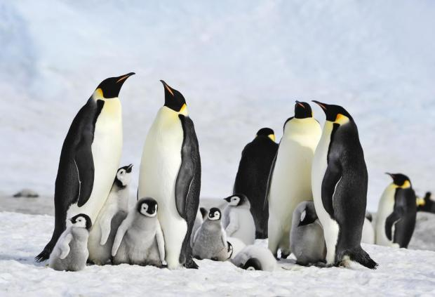 Antarctic penguins suffer 'catastrophic' breeding failure
